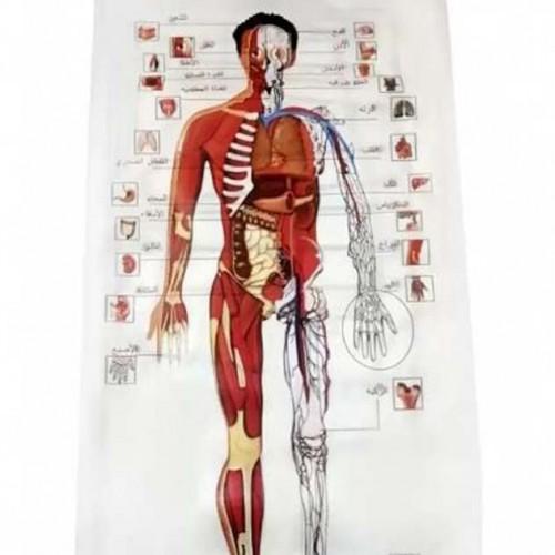 سجادة لتعليم أجزاء جسم الإنسان مع وظائفها